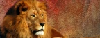 Lion - FB Cover 2 (1)