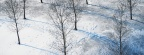Cover FB  Snow-trees-arbre-cover