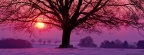 Cover FB  Winter Sunset and the Majestic Oak, Germany