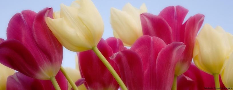 tulipes fleurs fb timeline 20 5000 photos de couverture facebook. Black Bedroom Furniture Sets. Home Design Ideas