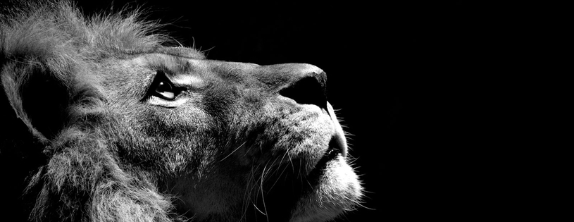 Lion - FB Cover 2 (2).jpg