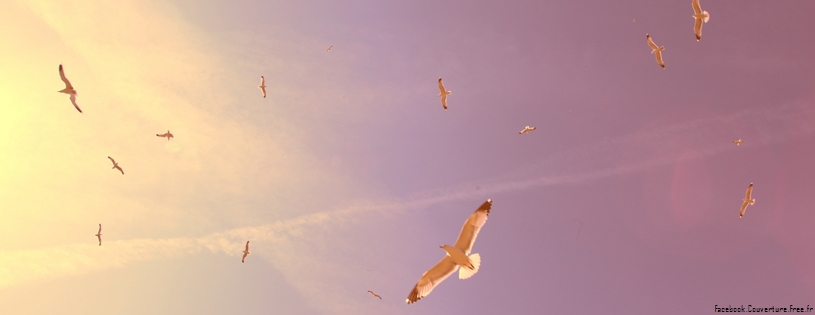 flying seagulls-Facebook Cover