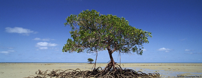 Cover FB  Mangrove Tree, Daintree National Park, Australia