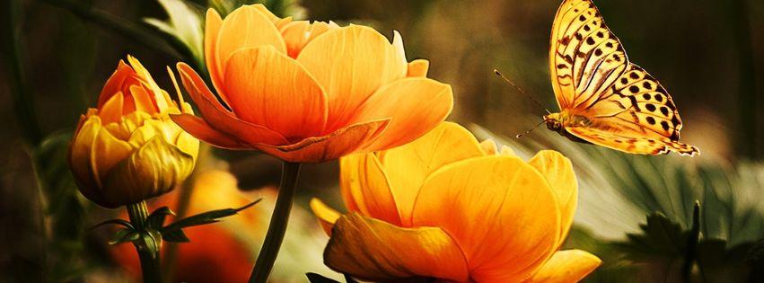 fleur et papillon 5000 photos de couverture facebook. Black Bedroom Furniture Sets. Home Design Ideas