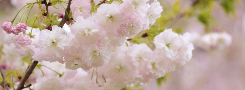 belles fleurs blanches 5000 photos de couverture facebook. Black Bedroom Furniture Sets. Home Design Ideas